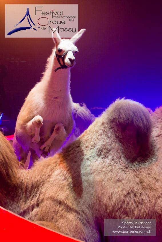 M60118A0361 - Lama de Jon Caplot sautant par dessus les chameaux