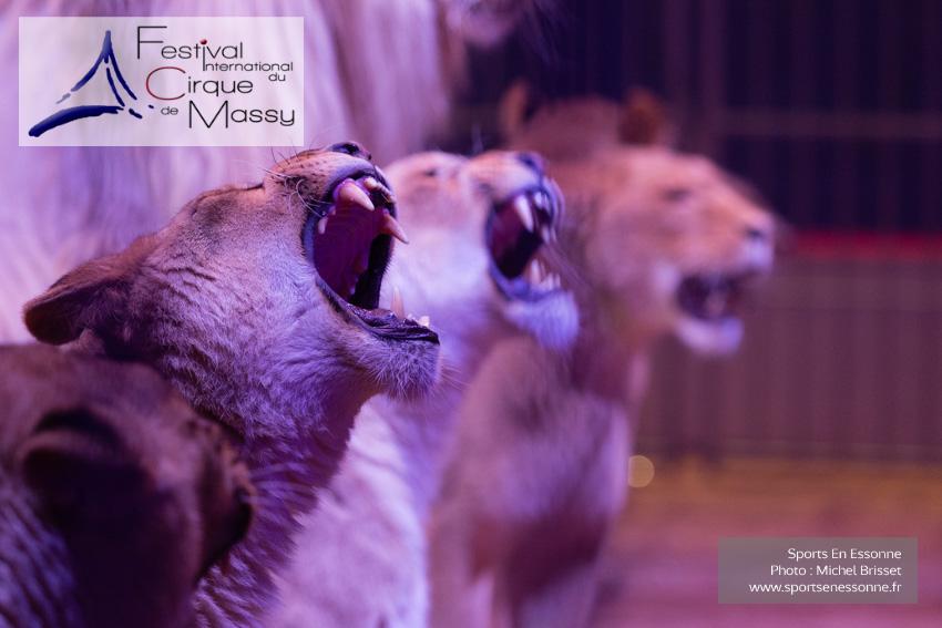 M60120A0685 - Lions - Steeve Caplot