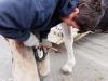 M60116A0057 - Fixation des fers en plastique pour que le cheval ne glisse pas sur la piste