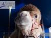 M60118A0023 - Les chameaux sont arrivés