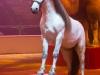 M60118A0346 - Un des cheval blanc de Jon Caplot