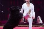 MB170113A0175 - Gina Giovanni - Dressage de chiens - Belgique