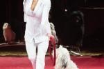 MB170113A0203 - Gina Giovanni - Dressage de chiens - Belgique