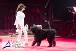 MB170113A0212 - Gina Giovanni - Dressage de chiens - Belgique