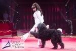 MB170113A0216 - Gina Giovanni - Dressage de chiens - Belgique