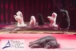 MB170113A0233 - Gina Giovanni - Dressage de chiens - Belgique