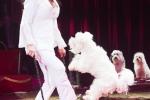 MB170113A0244 - Gina Giovanni - Dressage de chiens - Belgique