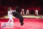 MB170115A0888 - Gina Giovanni - Dressage de chiens - Belgique