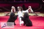 MB170115A0904 - Gina Giovanni - Dressage de chiens - Belgique