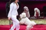 MB170115A0918 - Gina Giovanni - Dressage de chiens - Belgique