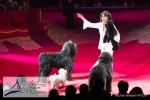 MB170115A0936 - Gina Giovanni - Dressage de chiens - Belgique