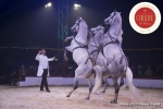 MB180111A0405-Marlon Zinnecker - Cavalerie - Allemagne
