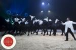 MB180111A0338-Marlon Zinnecker - Cavalerie - Allemagne