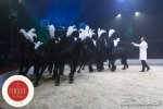 MB180111A0336-Marlon Zinnecker - Cavalerie - Allemagne