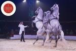 MB180111A0405-Marlon Zinnecker - Cavalerie - Allemagne