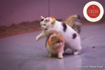 MB180111A2279-Duo Savitsky - Jeux de chats - Ukraine