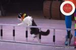 MB180114A0265-Duo Savitsky - Jeux de chats - Ukraine