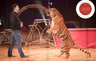 MB190109A0358-Tom DIECK JR - Lions & Tigres
