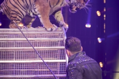 MB190110A0753-Tom DIECK JR - Lions & Tigres