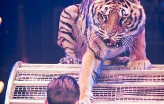 MB190111A0515-Tom DIECK JR - Lions & Tigres