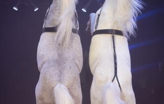 MB190110A0982-Louis KNIE - Carrousel équestre et chevaux en liberté