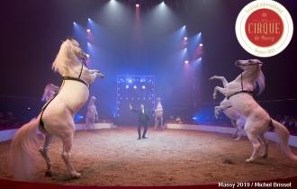 MB190110A2041-Louis KNIE - Carrousel équestre et chevaux en liberté