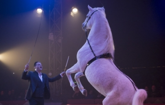 MB190110A3305-Louis KNIE - Carrousel équestre et chevaux en liberté