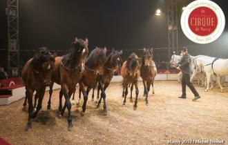 MB190112A2121-Louis KNIE - Carrousel équestre et chevaux en liberté