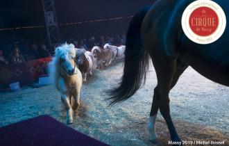 MB190112A2134-Louis KNIE - Carrousel équestre et chevaux en liberté