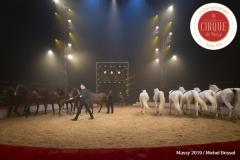 MB190110A1996-Louis KNIE - Carrousel équestre et chevaux en liberté