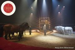 MB190110A1999-Louis KNIE - Carrousel équestre et chevaux en liberté