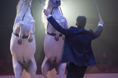 MB190110A3288-Louis KNIE - Carrousel équestre et chevaux en liberté