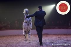 MB190110A3307-Louis KNIE - Carrousel équestre et chevaux en liberté