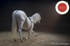 MB190112A2165-Louis KNIE - Carrousel équestre et chevaux en liberté