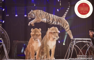 MB190110A0774-Tom DIECK JR - Lions & Tigres
