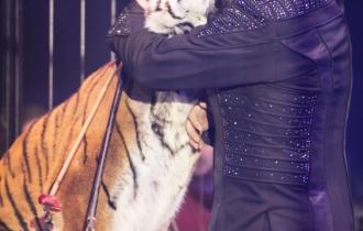MB190110A0785-Tom DIECK JR - Lions & Tigres