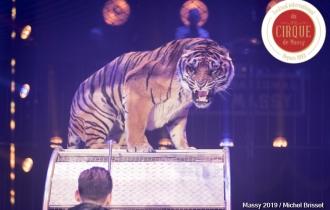 MB190111A0513-Tom DIECK JR - Lions & Tigres