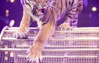 MB190111A0517-Tom DIECK JR - Lions & Tigres