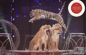 MB190111A0527-Tom DIECK JR - Lions & Tigres