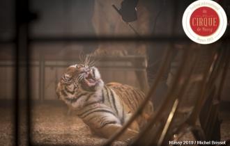 MB190112A1346-Tom DIECK JR - Lions & Tigres