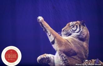 MB190112A3344-Tom DIECK JR - Lions & Tigres