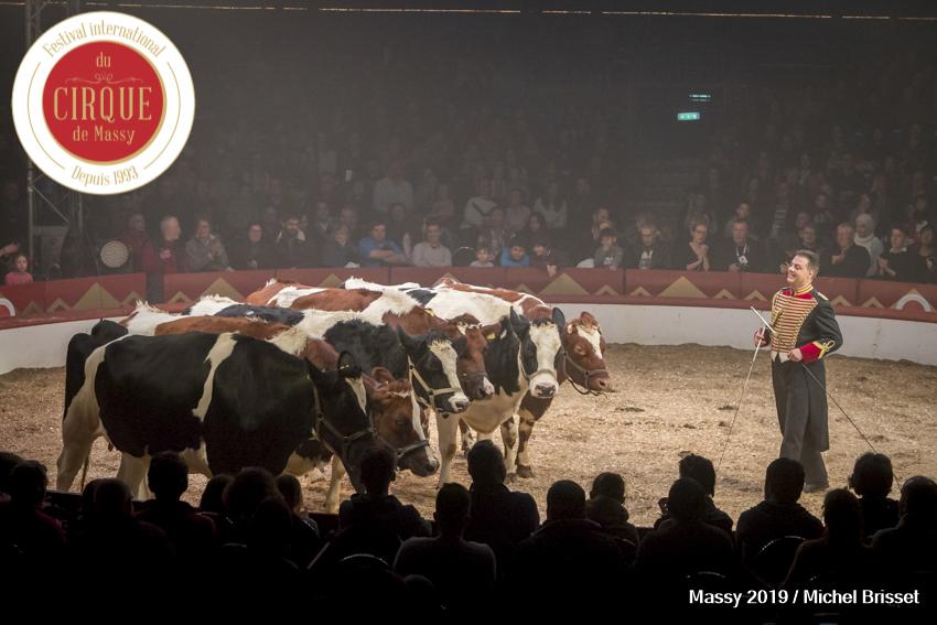 MB190111A2025-Louis KNIE - Vaches dressées