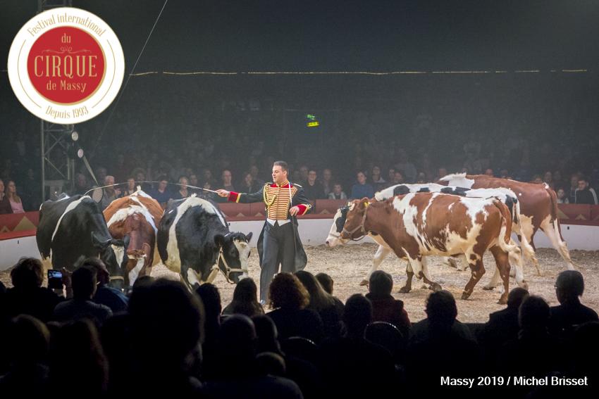 MB190112A4684-Louis KNIE - Vaches dressées