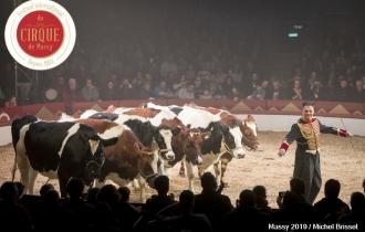 MB190111A2022-Louis KNIE - Vaches dressées