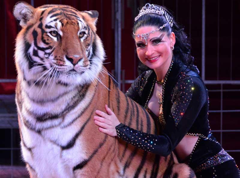 Carmen Zander - Tigres