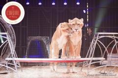 MB190109A0346-Tom DIECK JR - Lions & Tigres
