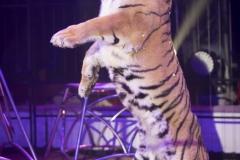 MB190109A0367-Tom DIECK JR - Lions & Tigres