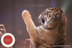 MB190111A0507-Tom DIECK JR - Lions & Tigres