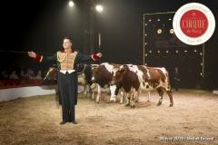 MB190111A1411-Louis KNIE - Vaches dressées